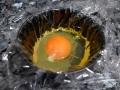 Poner huevo en film